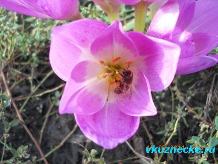 знакомства в долгопрудном пчела